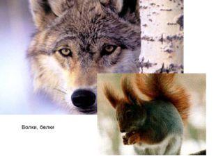 Волки, белки