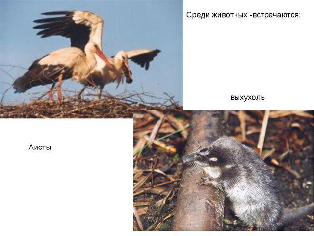 Среди животных -встречаются: Аисты выхухоль