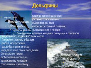 Дельфины Дельфины характеризуются присутствием относительно небольшая морда;