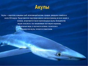Акулы Акулы — надотряд хрящевых рыб, включающий восемь отрядов, двадцать семе