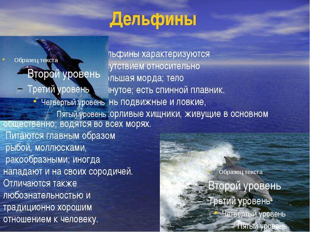 Дельфины Дельфины характеризуются присутствием относительно небольшая морда;...