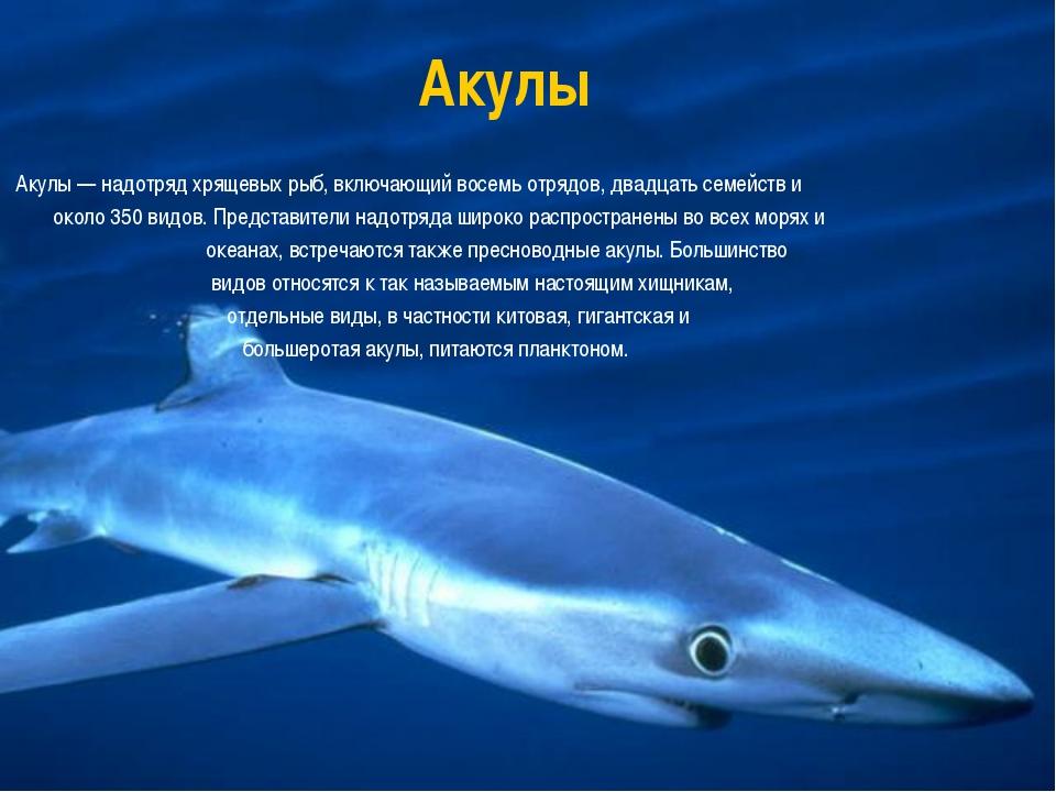 Акулы Акулы — надотряд хрящевых рыб, включающий восемь отрядов, двадцать семе...