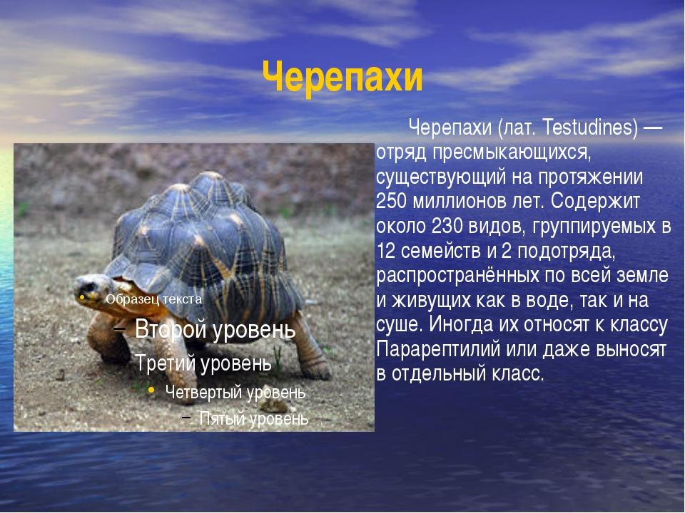 Черепахи Черепахи (лат. Testudines) — отряд пресмыкающихся, существующий на п...