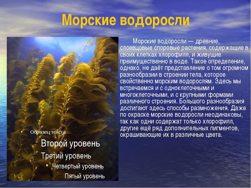 Морские водоросли Морские водоросли — древние, слоевцовые споровые растения,...
