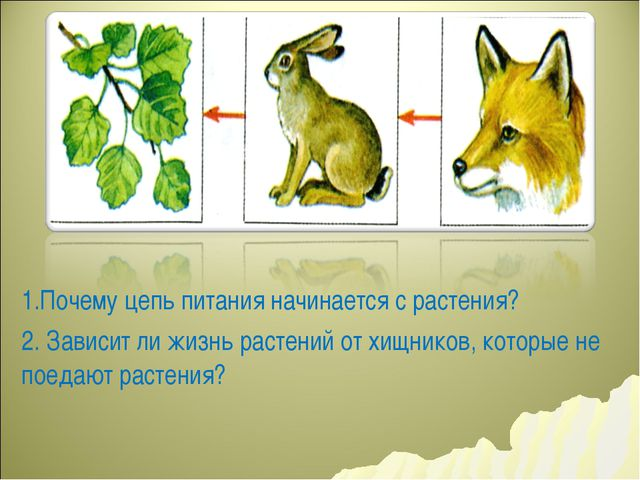 1.Почему цепь питания начинается с растения? 2. Зависит ли жизнь растений от...