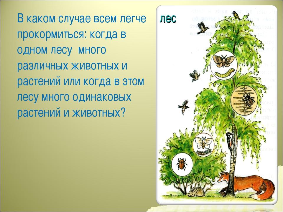лес В каком случае всем легче прокормиться: когда в одном лесу много различны...