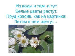 Из воды и там, и тут Белые цветы растут. Пруд красив, как на картинке, Летом