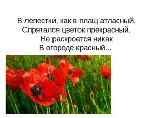 В лепестки, как в плащ атласный, Спрятался цветок прекрасный. Не раскроется н