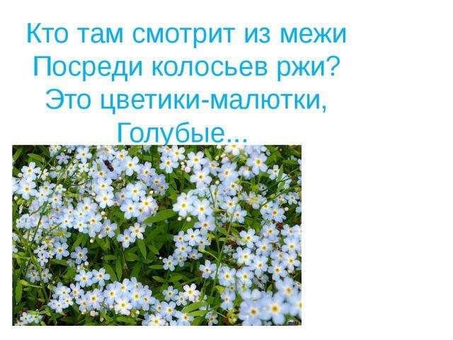 Кто там смотрит из межи Посреди колосьев ржи? Это цветики-малютки, Голубые...