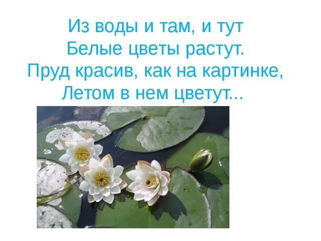 Из воды и там, и тут Белые цветы растут. Пруд красив, как на картинке, Летом...
