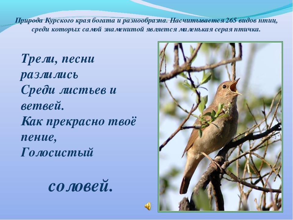Природа Курского края богата и разнообразна. Насчитывается 265 видов птиц, ср...