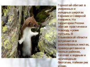 Горностай обитает в умеренных и холодных широтах Евразии и Северной Америки.