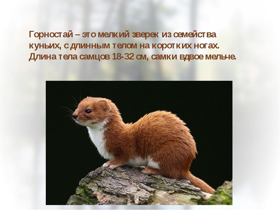 руовруоауоау Горностай – это мелкий зверек из семейства куньих, с длинным тел...
