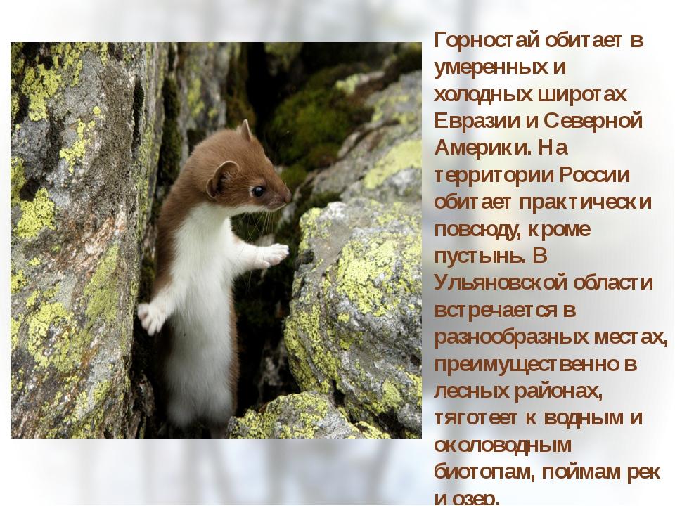 Горностай обитает в умеренных и холодных широтах Евразии и Северной Америки....