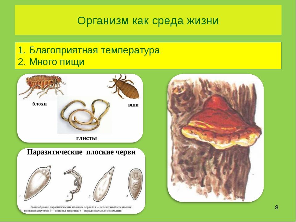 Организм как среда жизни Благоприятная температура Много пищи *