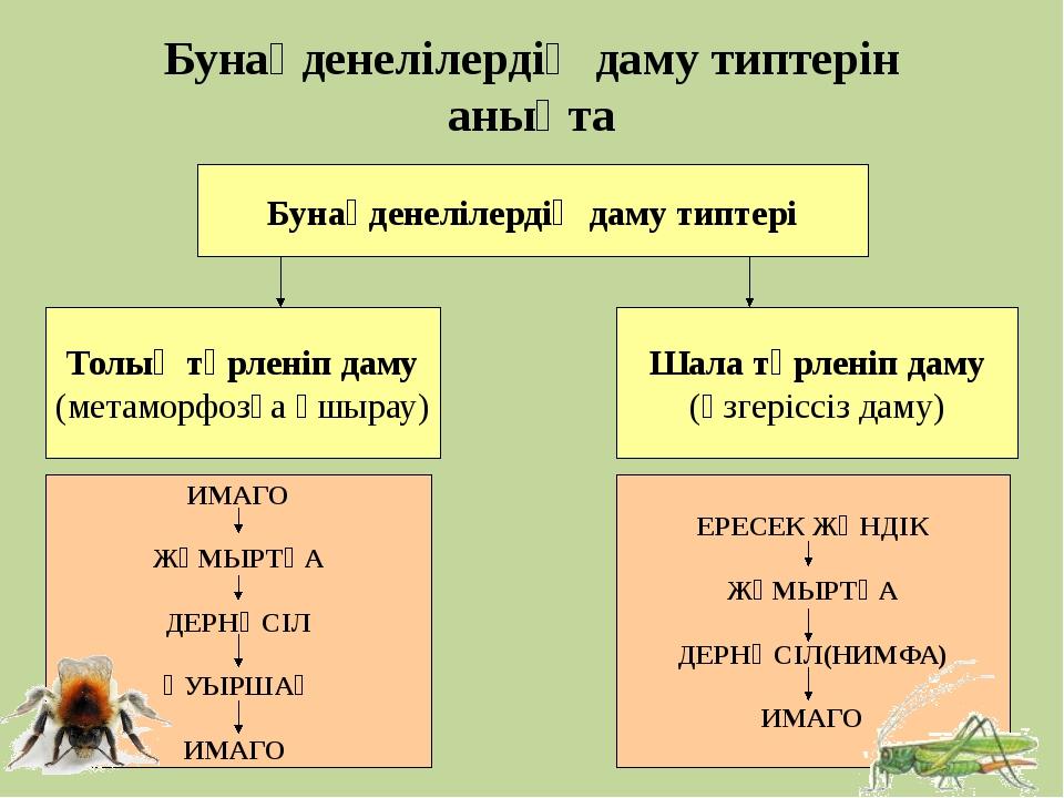 Бунақденелілердің даму типтері Бунақденелілердің даму типтерін анықта Толық т...