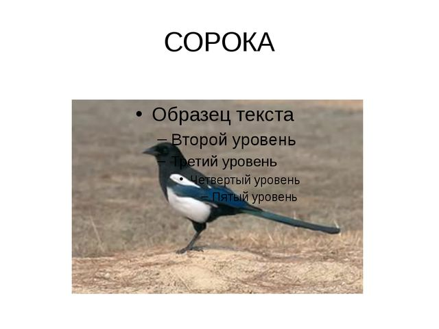 СОРОКА