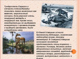 В Южной Америке исчезли броненосец дедикурус, гигантская саблезубая кошка, ле