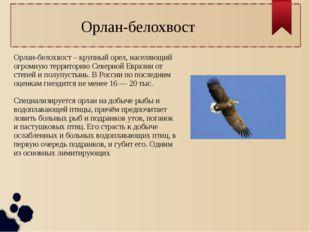 Орлан-белохвост – крупный орел, населяющий огромную территорию Северной Евраз