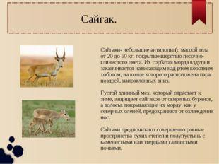 Сайгаки- небольшие антилопы (с массой тела от 20 до 50 кг, покрытые шерстью п