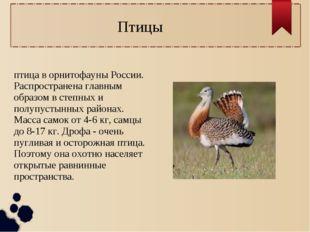 Птицы Дрофа или дуда́к — крупная птица в орнитофауны России. Распространена г