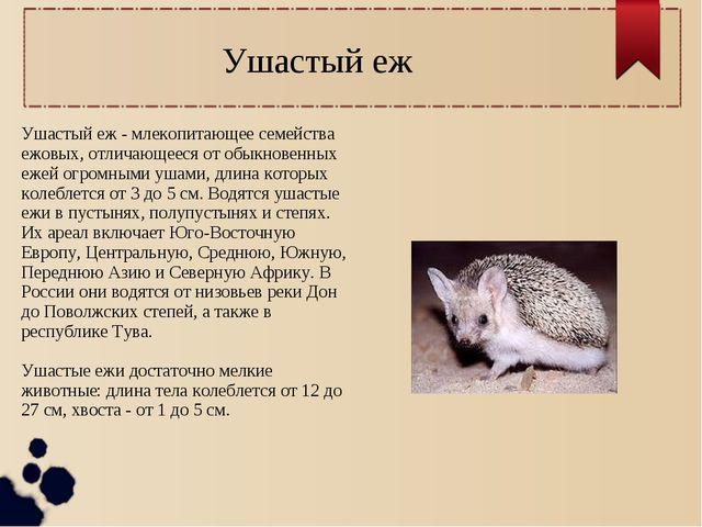 Ушастый еж - млекопитающее семейства ежовых, отличающееся от обыкновенных еже...
