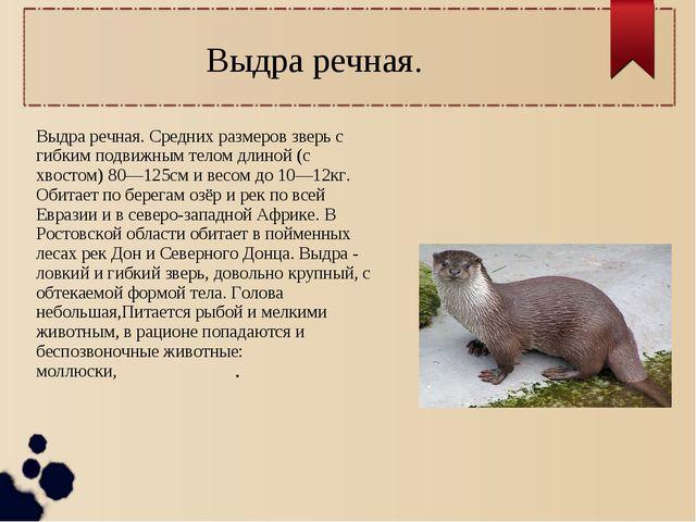 Выдра речная. Средних размеров зверь с гибким подвижным телом длиной (с хвост...