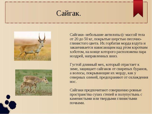 Сайгаки- небольшие антилопы (с массой тела от 20 до 50 кг, покрытые шерстью п...