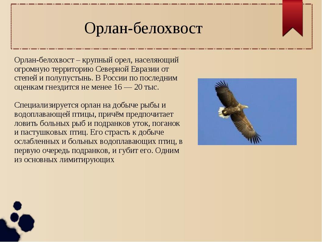 Орлан-белохвост – крупный орел, населяющий огромную территорию Северной Евраз...