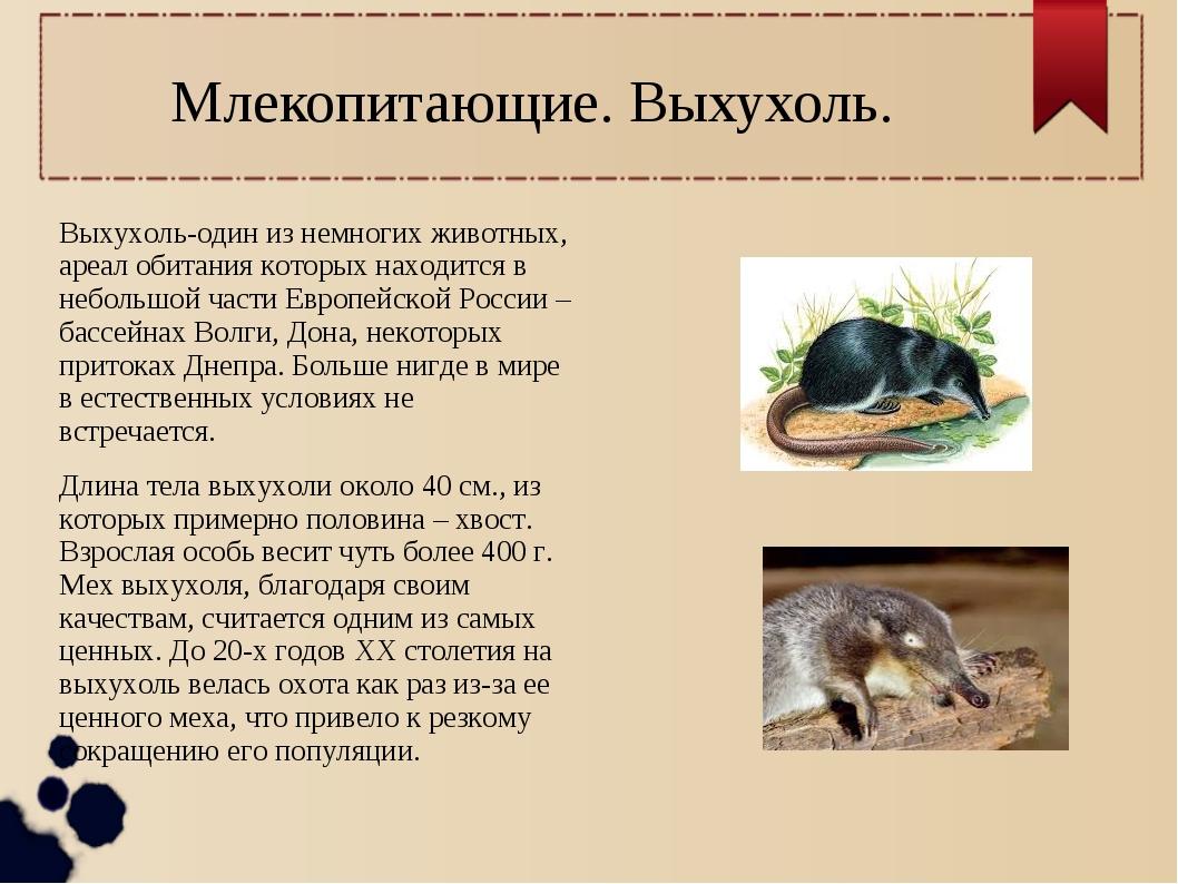 Млекопитающие. Выхухоль. Выхухоль-один из немногих животных, ареал обитания к...