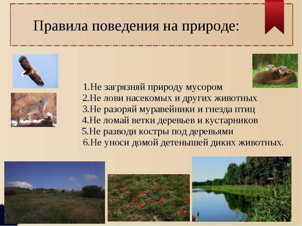 Правила поведения на природе: 1.Не загрязняй природу мусором 2.Не лови насеко...