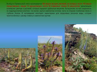 Вообще в Провальской степи насчитывается 650 видов высших растений, из которы