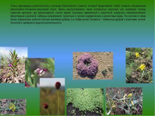 Очень разнородны растительность и рельеф Калиновского участка, который предст