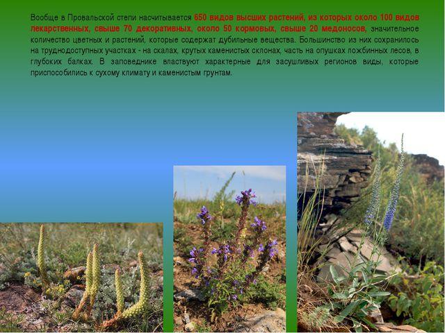 Вообще в Провальской степи насчитывается 650 видов высших растений, из которы...