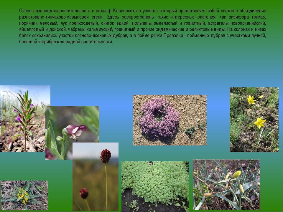 Очень разнородны растительность и рельеф Калиновского участка, который предст...
