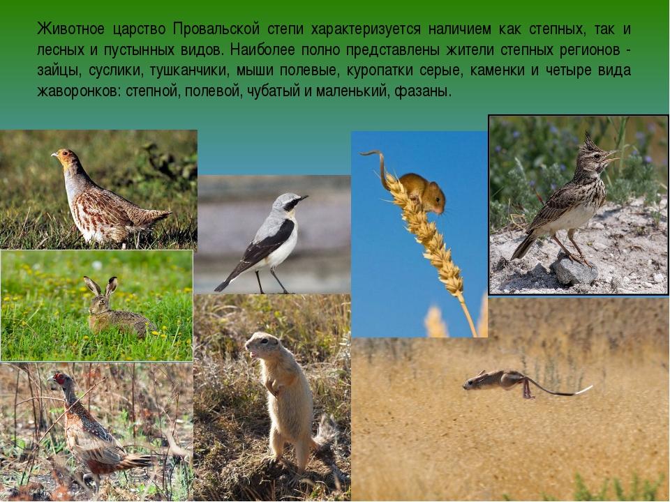 Животное царство Провальской степи характеризуется наличием как степных, так...