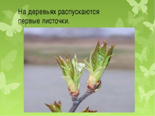 На деревьях распускаются первые листочки.