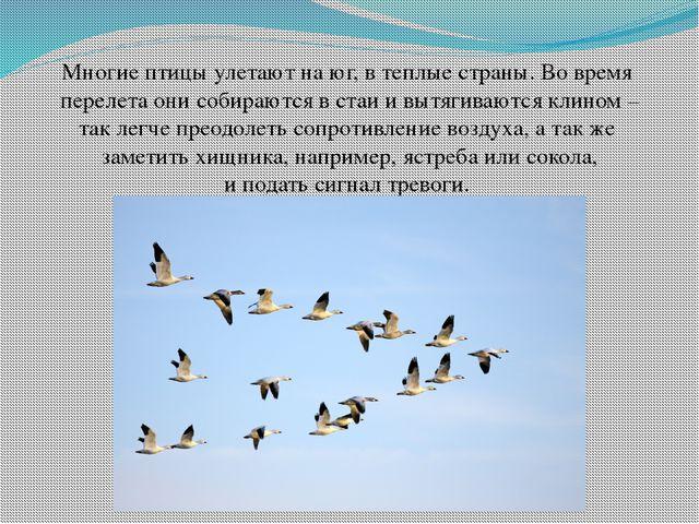 Многие птицы улетают на юг, в теплые страны. Во время перелета они собираются...