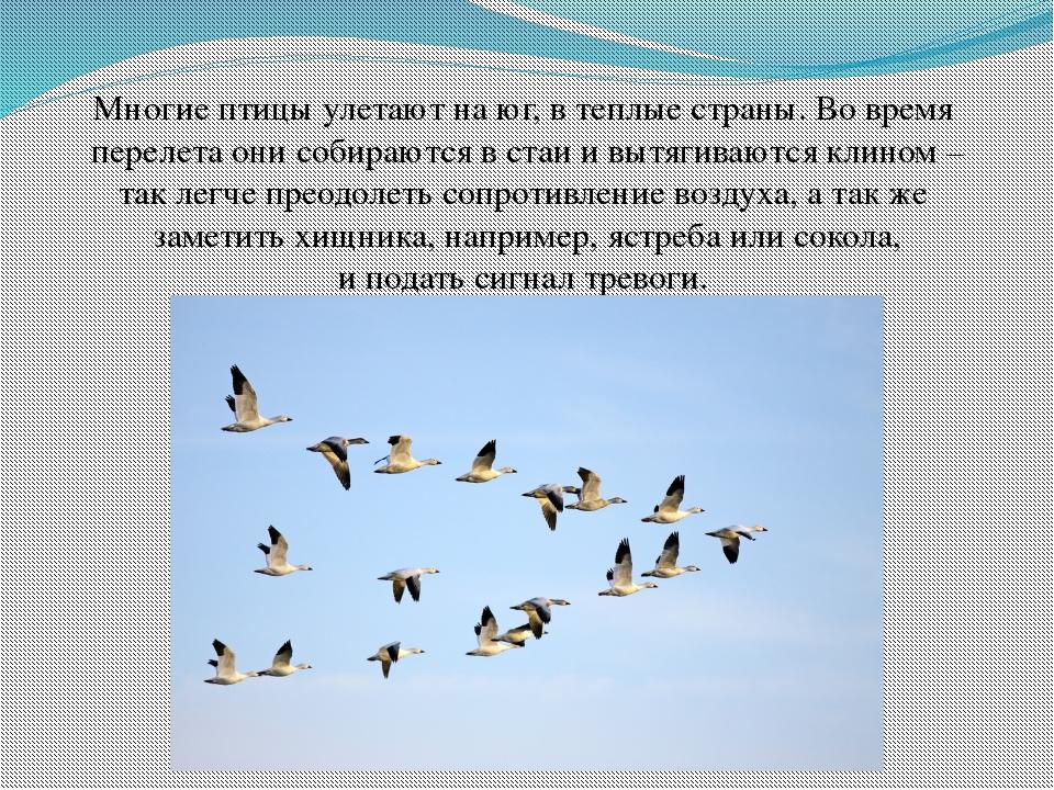 каталась улетают утки в теплые края картинки прикольные факту