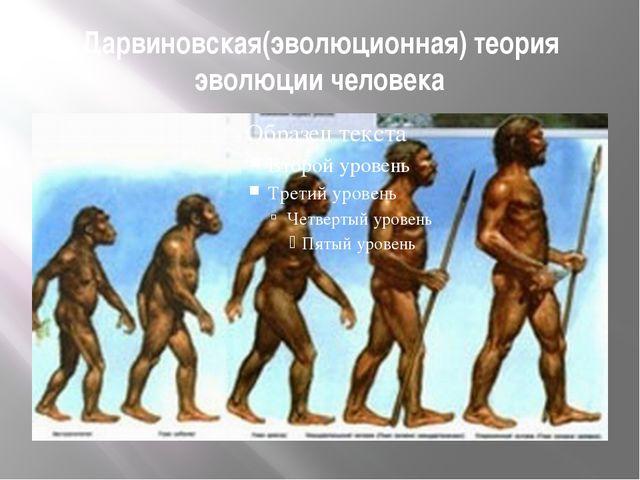 Дарвиновская(эволюционная) теория эволюции человека