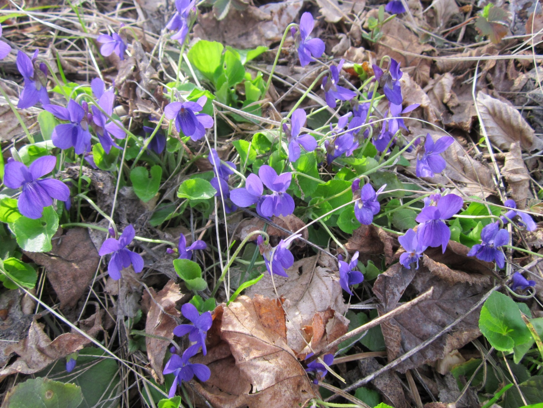 D:\Документы\фото о природе\весна\IMG_0248.JPG