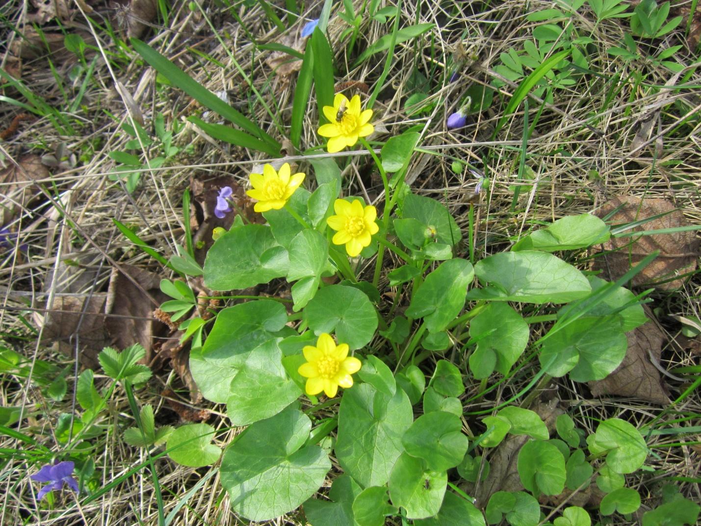 D:\Документы\фото о природе\весна\IMG_0249.JPG