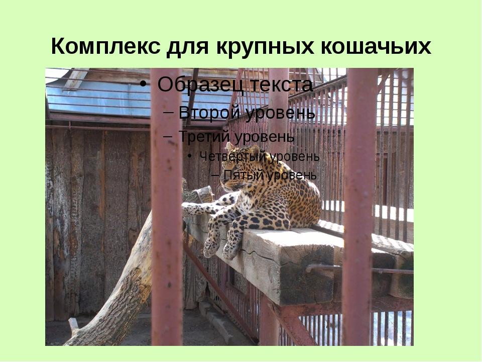 Комплекс для крупных кошачьих