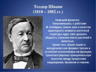 Теодор Шванн (1810 – 1882 гг.) Немецкий физиолог. Ознакомившись с работами М.