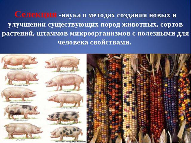 Селекция -наука о методах создания новых и улучшении существующих пород живот...
