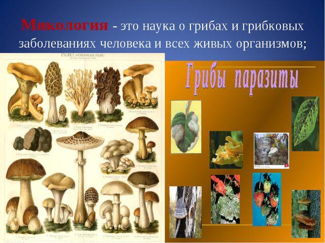 Микология - это наука о грибах и грибковых заболеваниях человека и всех живых...