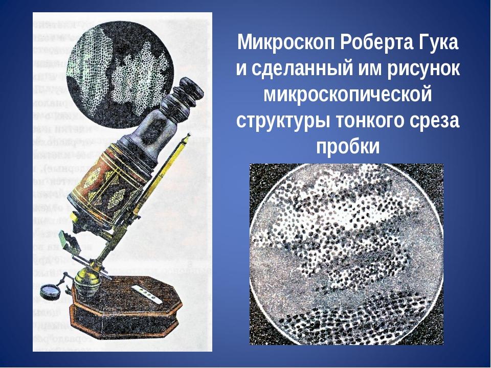 Микроскоп Роберта Гука и сделанный им рисунок микроскопической структуры тонк...