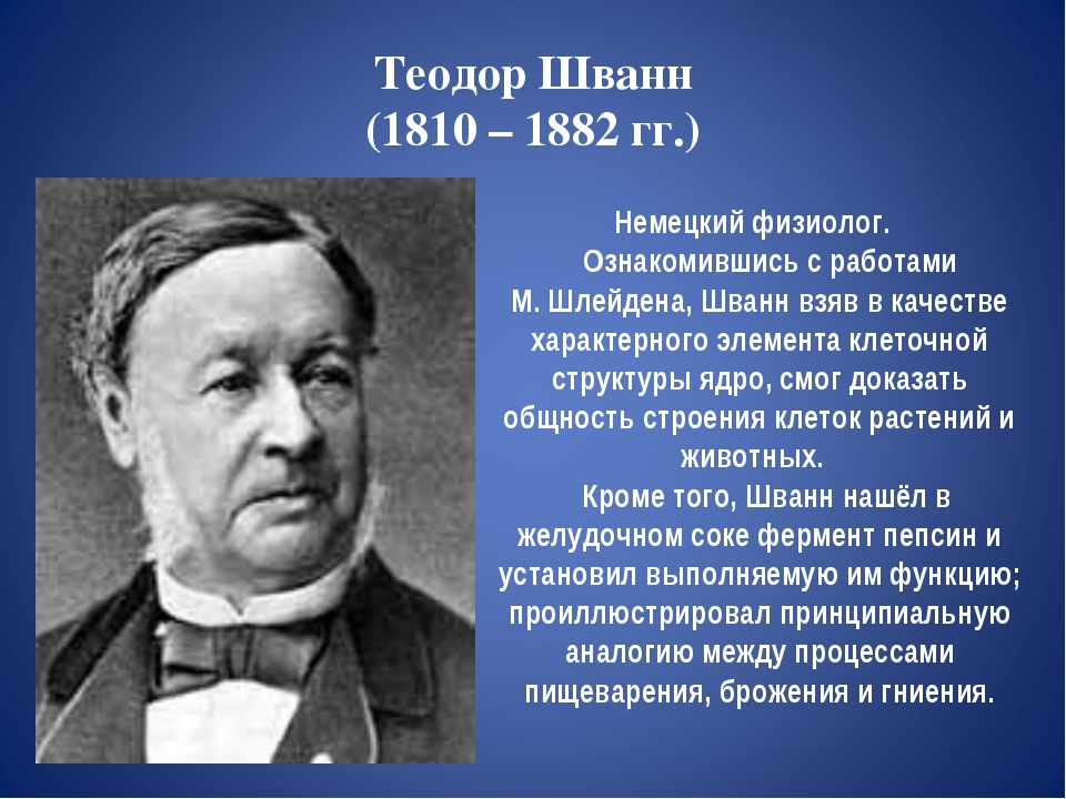 Теодор Шванн (1810 – 1882 гг.) Немецкий физиолог. Ознакомившись с работами М....