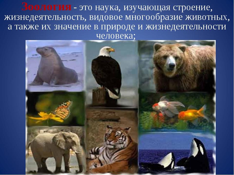 Зоология - это наука, изучающая строение, жизнедеятельность, видовое многообр...
