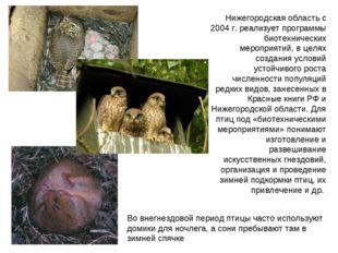 Нижегородская область с 2004 г. реализует программы биотехнических мероприяти